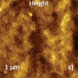 Height and phase images, which were recorded at elevated location, at high force