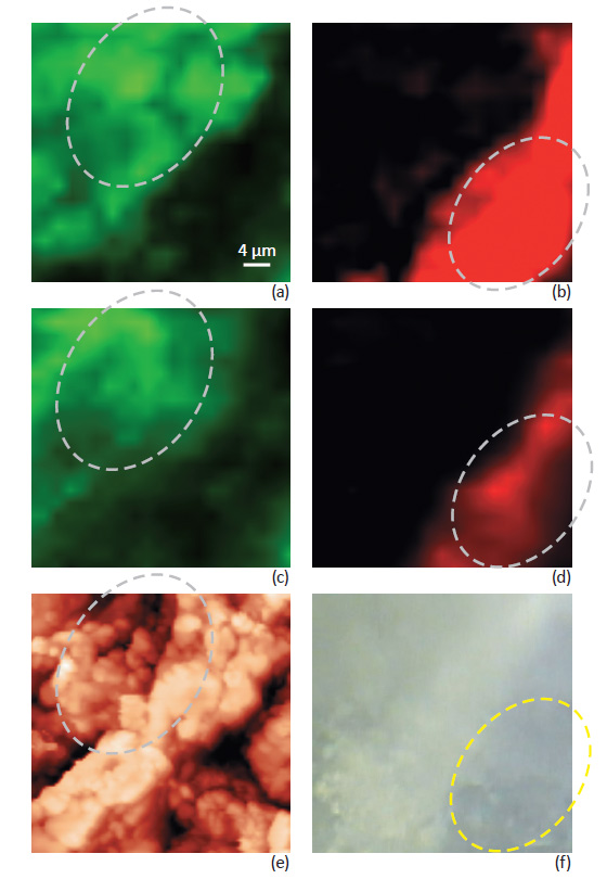 Raman mapping: Focus track and without Focus track. AFM topography image and optical image.